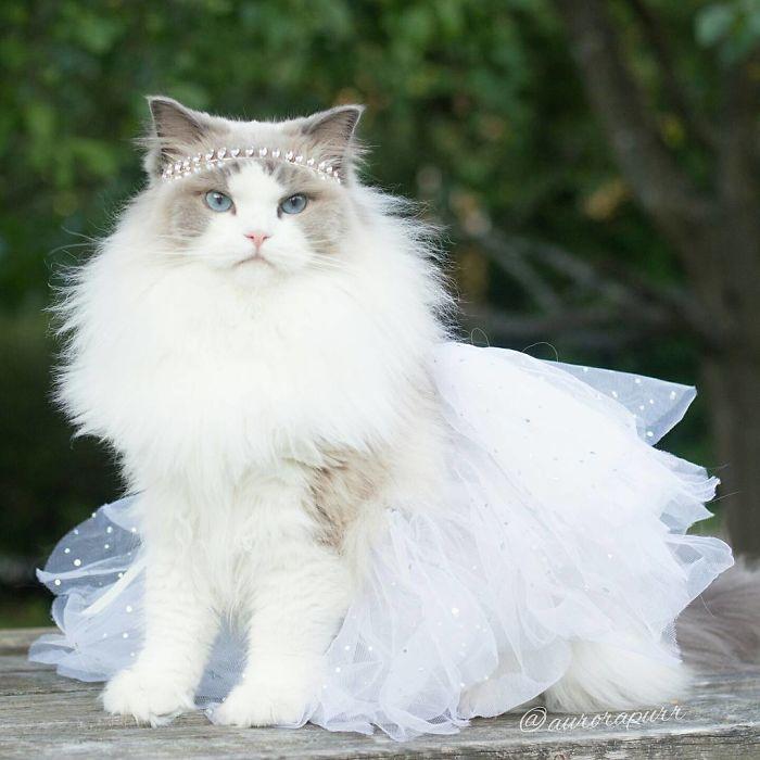 gata-princesa-01