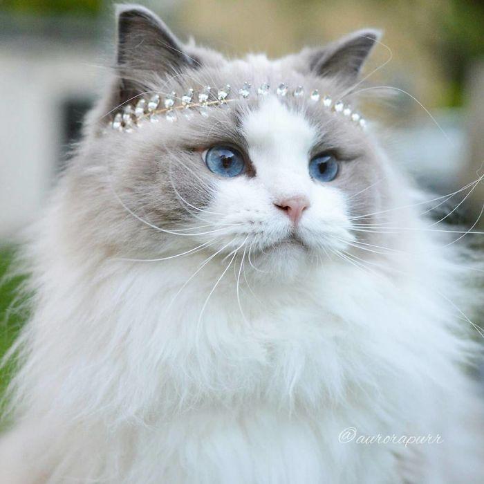 gata-princesa-04