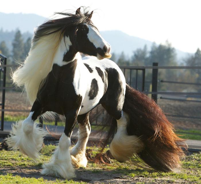 cavalos podem ter bigode 02