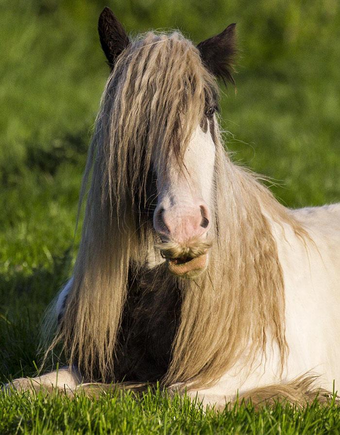 cavalos podem ter bigode 04