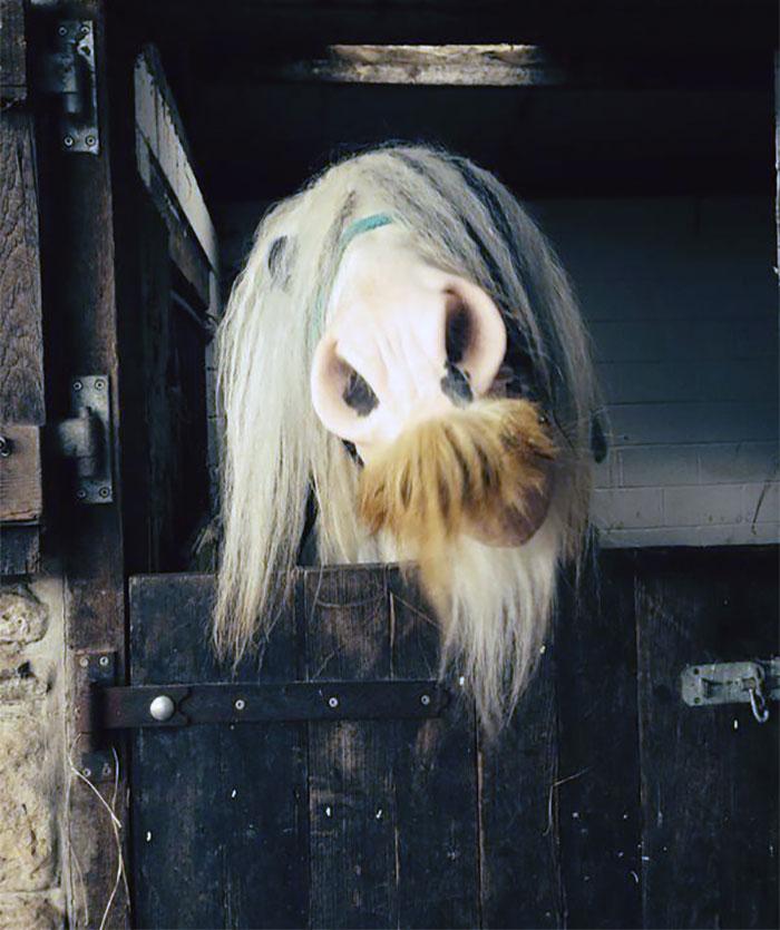 cavalos podem ter bigode 15
